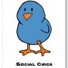 SocialChicky